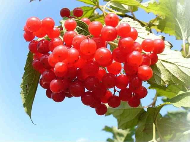 Клюква витамины и минералы