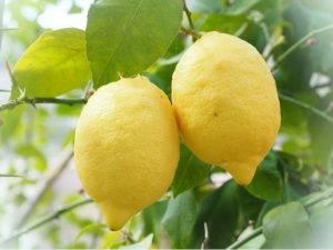 Лимон витамины и минералы