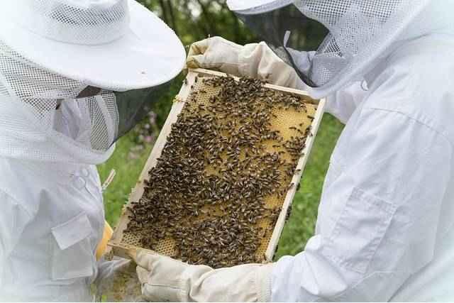 Мед витамины и минералы