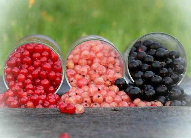 Смородина витамины и минералы