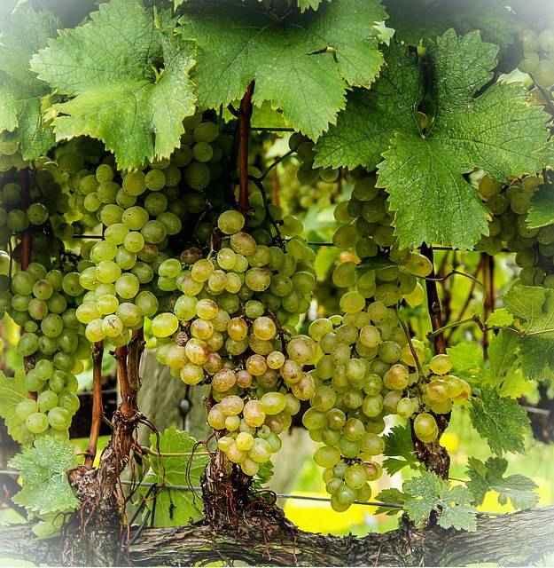 Виноград витамины и минералы