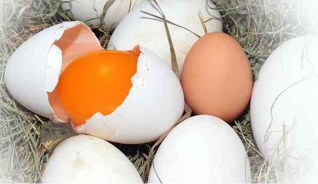 Для чего полезны яйца