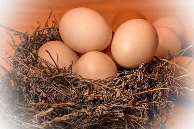 Витамины в яйце курином