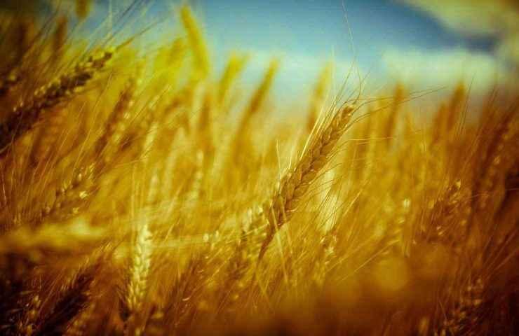 Пшеница содержит молибден
