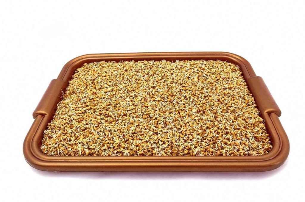 фосфор в пророщенной пшенице