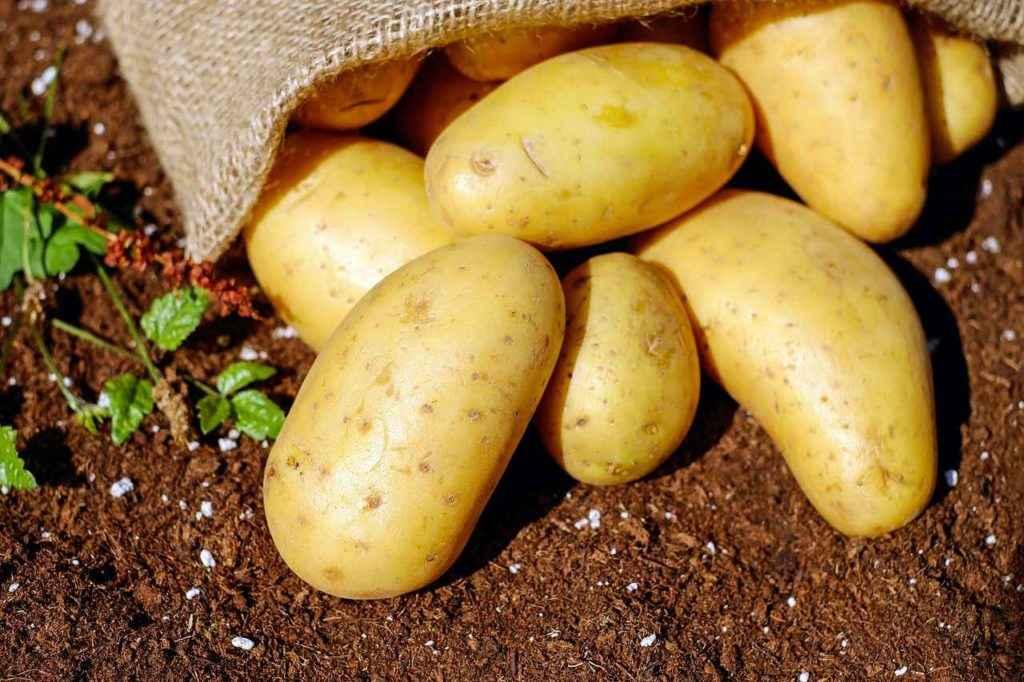 картофель содержит медь