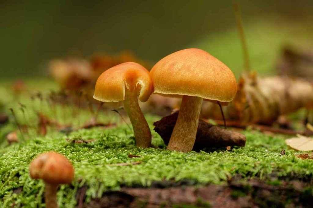 кобальт содержится в грибах