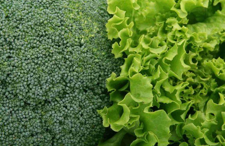 Brassica sylvestris Брокколи